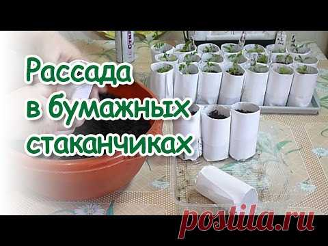Lyubov Zibrova. Seedling in paper cups and not only \/ Seedlings in paper cups and not only