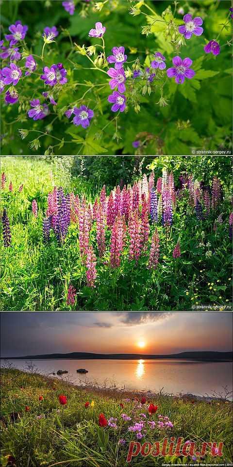 Красивы полевые цветы