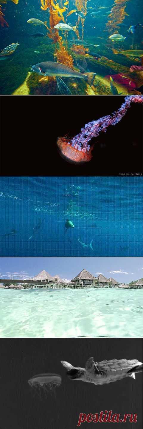 Гифки с морскими созданиями | DiddlyBop