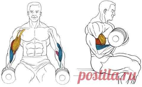 Упражнения с гантелями.
