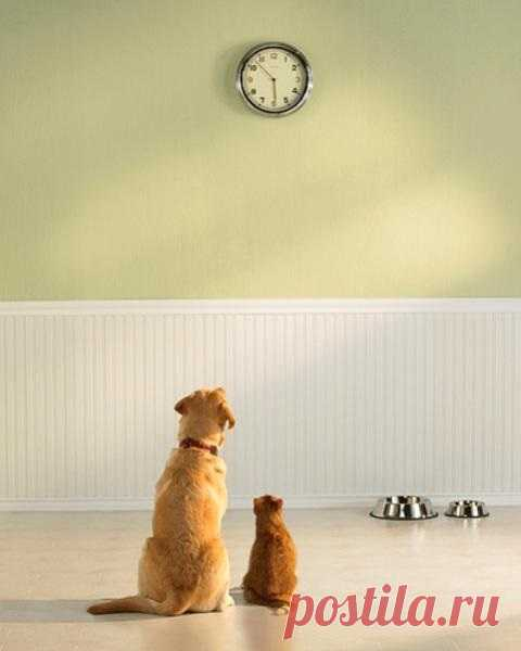Загадка: во сколько в доме ужин?