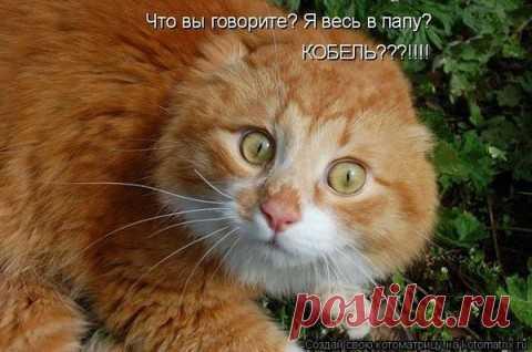 кот и этим все сказано