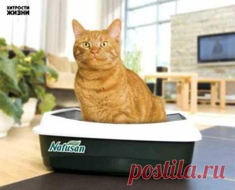 (+1) tema - se Libramos del olor de la gata | los consejos Útiles