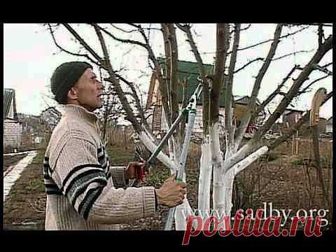 As it is correct to cut off an apple-tree - YouTube