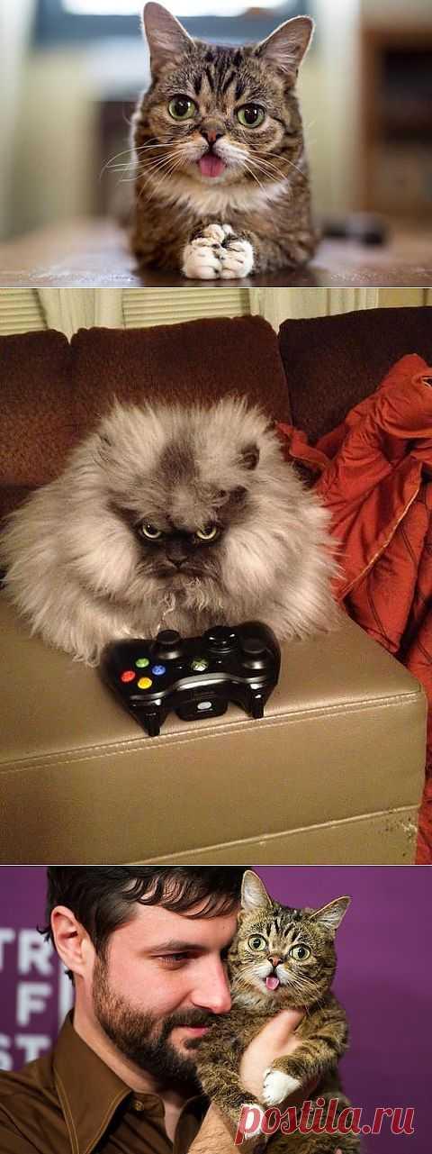 Самые популярные коты Интернета: Топ-5 | Уши, лапы, хвост