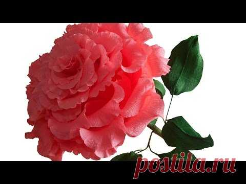 La rosa grande del papel ondulado, el maestro la clase