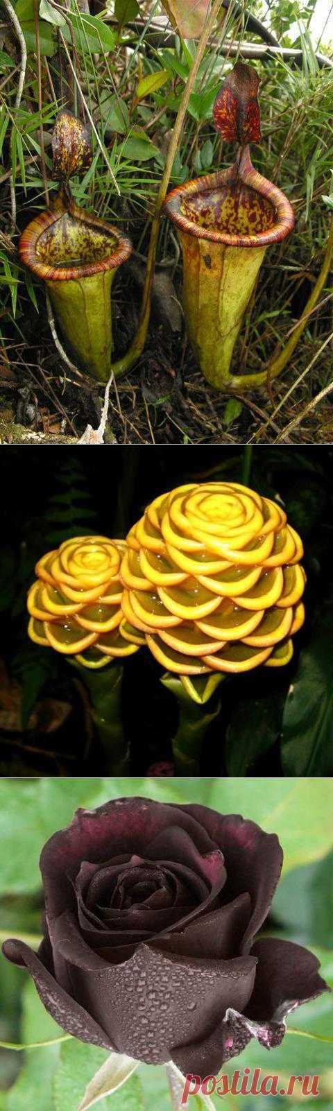 Самые необычные и редкие цветы.