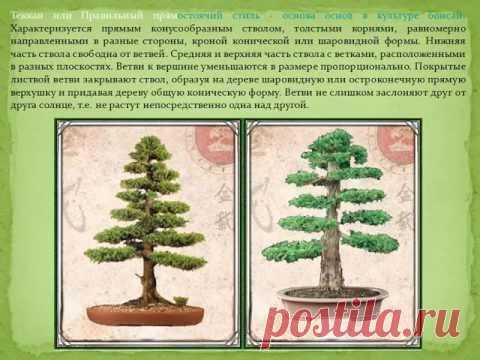 Как сделать хвойный бонсай в стиле Теккан из бисера Мастер класс  с подробным описанием смотрим здесь:  Раскрыт секрет превращения стекла в дерево! Мастер класс http://uvlekatelnie-bonsai.ru/raskryt-sekret-prevrashheniya-stekla-v-derevo.html Хвойный бонсай в стиле Теккан из бисера. Мастер класс http://uvlekatelnie-bonsai.ru/xvojnyj-bonsaj.html