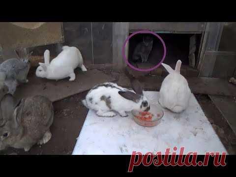 Бугорный кролик - YouTube