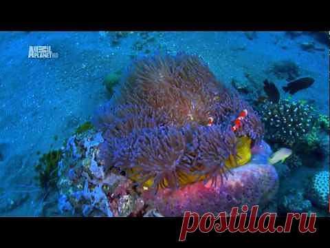 Чудеса голубой планеты (Азия - 5 серия) - YouTube