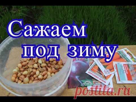 La plantación de la cebolla bajo el invierno. Las clases de la zanahoria, la remolacha bajo el invierno. (18.10.16)