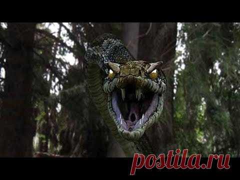 60 миллионов лет назад жила змея, весившая больше тонны . Чёрт побери