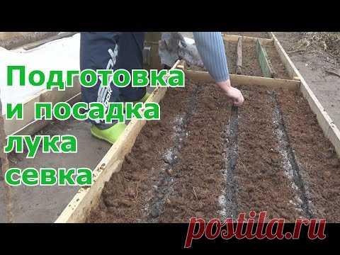 Подготовка и посадка лука севка весной