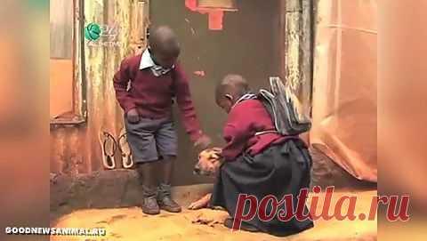 В Кении собака стала нянькой двух детей http://ushilapyhvost.ru/blog/43998526869