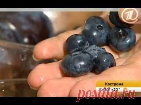 Черноплодная рябина: лечебные свойства, применение, противопоказания, как хранить