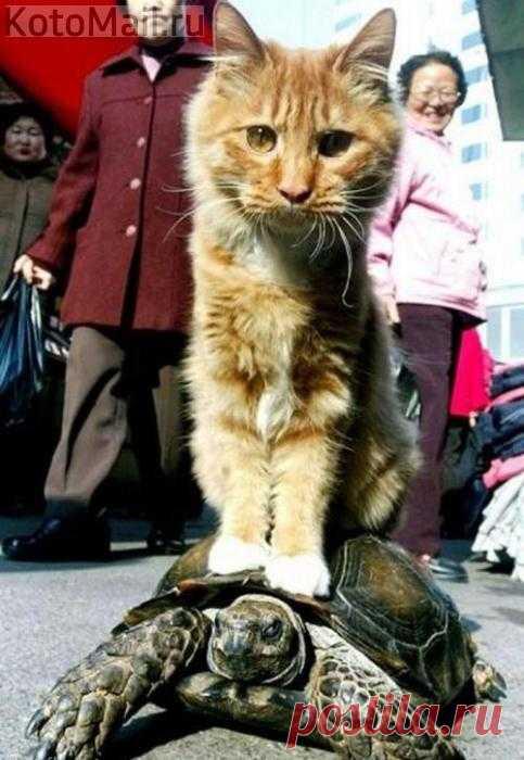 Шеф, тормозни на следующей!