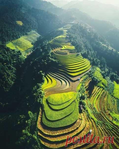Рисовые террасы, Шапа, Вьетнам.