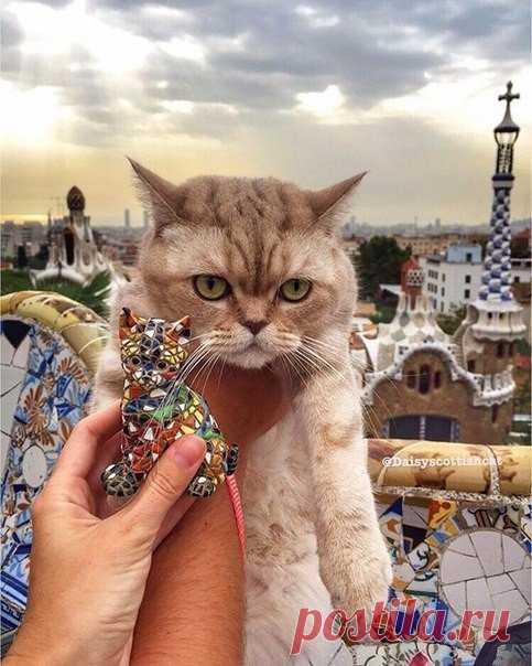 Кот, который путешествует больше меня😻