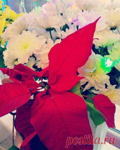 Наступает Старый Новый год, Открывай шампанское скорее🍾 Праздник пусть улыбки принесет Счастье мир ваш сделает светлее✨ Закружит пускай любовь И вовек не отпускает💝 Пусть успех приходит вновь и вновь, Все дела пусть он сопровождает 🎄🎉💐🎁✨❄❄❄
