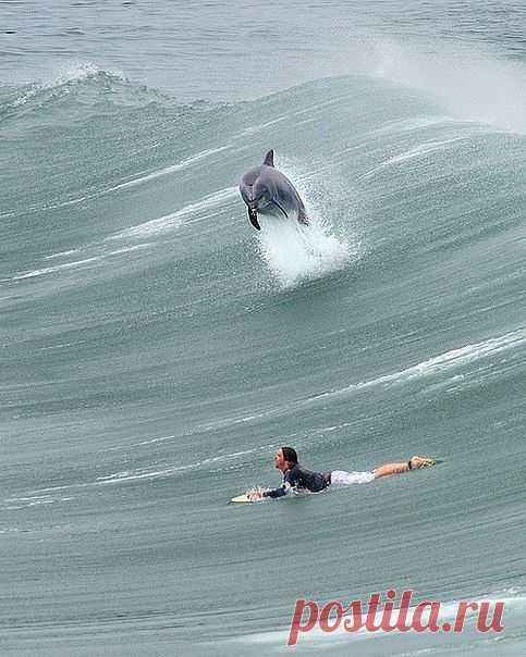 Наперегонки с дельфином