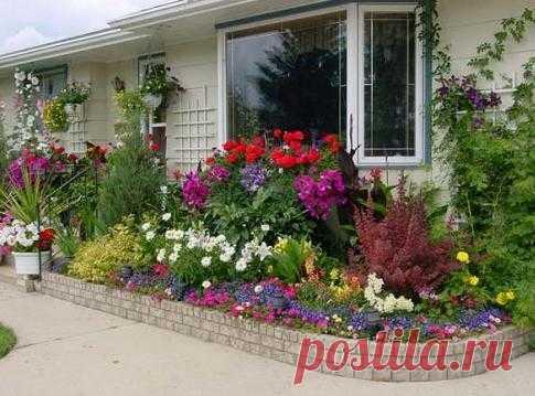Красивые цветы для дачи, фото. Какие цветы посадить на даче?