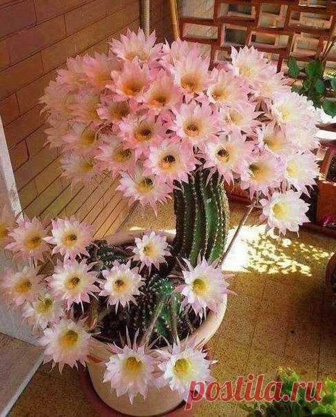 Даже кактус весну почуял 🌺