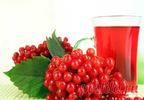 Wine from a guelder-rose in house conditions