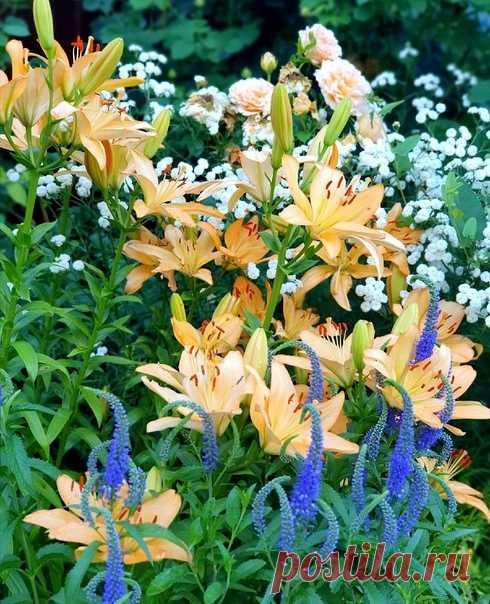КОПИЛКА ЛАНДШАФТНЫХ ИДЕЙ. Планируем свой сад: интересные сочетания растений и цветов (в альбом