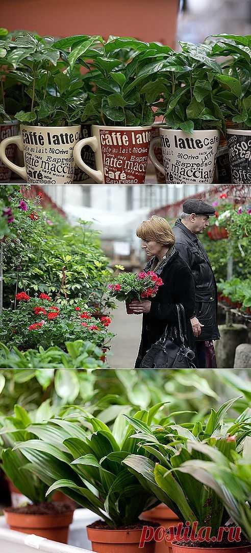 Адаптация купленных комнатных растений   МОЯ КВАРТИРА