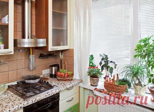 Растения на кухне на Supersadovnik.ru