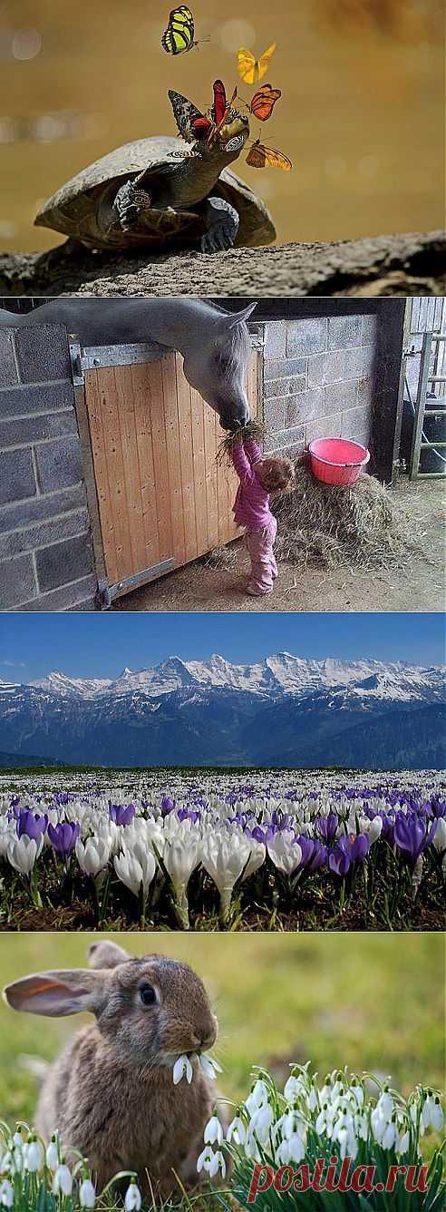 ♥Живой мир в твоем доме♥ Цветыツ
