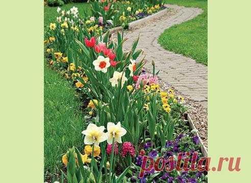 Создаем клумбу непрерывного цветения