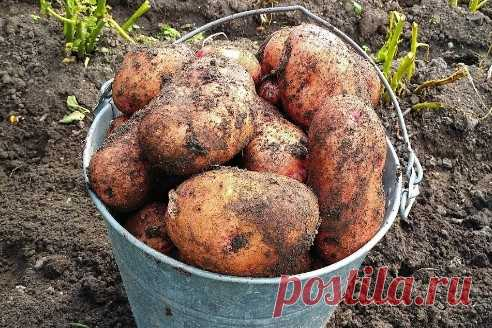 Картошка растет как бешеная! Собрал 120 мешков с 8-ми соток. Перед посадкой... ᅠᅠᅠᅠᅠᅠᅠᅠᅠᅠᅠᅠᅠᅠᅠᅠᅠᅠᅠᅠᅠᅠᅠᅠᅠᅠᅠᅠᅠᅠᅠᅠᅠᅠᅠᅠᅠᅠᅠᅠᅠᅠᅠᅠᅠᅠᅠ ᅠᅠᅠᅠᅠᅠᅠᅠᅠᅠᅠᅠᅠᅠᅠᅠᅠᅠᅠᅠᅠᅠᅠᅠᅠᅠᅠᅠᅠᅠᅠᅠᅠᅠᅠᅠᅠᅠᅠᅠᅠᅠᅠ  ᅠᅠᅠᅠᅠᅠᅠᅠᅠᅠᅠᅠᅠᅠᅠᅠᅠᅠᅠᅠᅠᅠᅠᅠᅠᅠᅠᅠᅠᅠᅠᅠᅠᅠᅠᅠᅠᅠᅠᅠᅠᅠᅠᅠᅠᅠᅠ ᅠᅠᅠᅠᅠᅠᅠᅠᅠᅠᅠᅠᅠᅠᅠᅠᅠᅠᅠᅠᅠᅠᅠᅠᅠᅠᅠᅠᅠᅠᅠᅠᅠᅠᅠᅠᅠᅠᅠᅠᅠᅠᅠ   ᅠᅠᅠ шапка спицами для мальчика