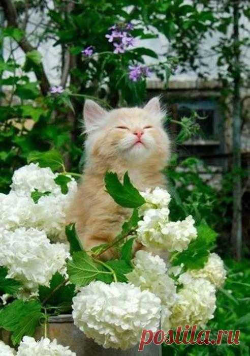 С новым утром! С новым днём! Пусть только радость будет в нём!
