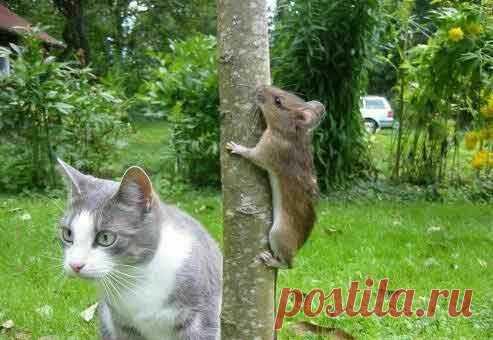 … а нюх, как у собаки, а глаз, как у орла )) По ссылке читайте интересные факты о кошках