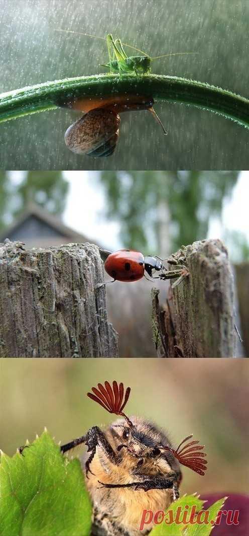 Интересное рядом - жизнь насекомых крупным планом.