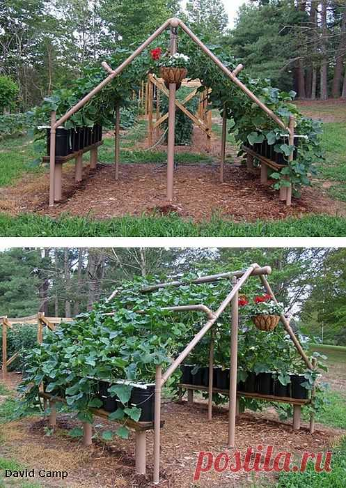 Plastic kitchen garden or business – in a pipe.