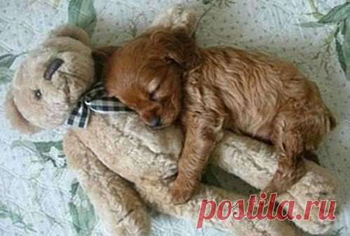 Спи, моя радость, усни!..