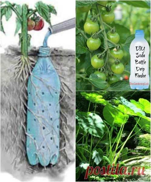 Полезные советы для садоводов Приближается сезон садоводства, вернее он в самом разгаре. Независимо от того, являетесь ли вы новичком или вы уже заядлый садовод, вы знаете, что садоводство — это полезный способ проводить больше времени на открытом воздухе!