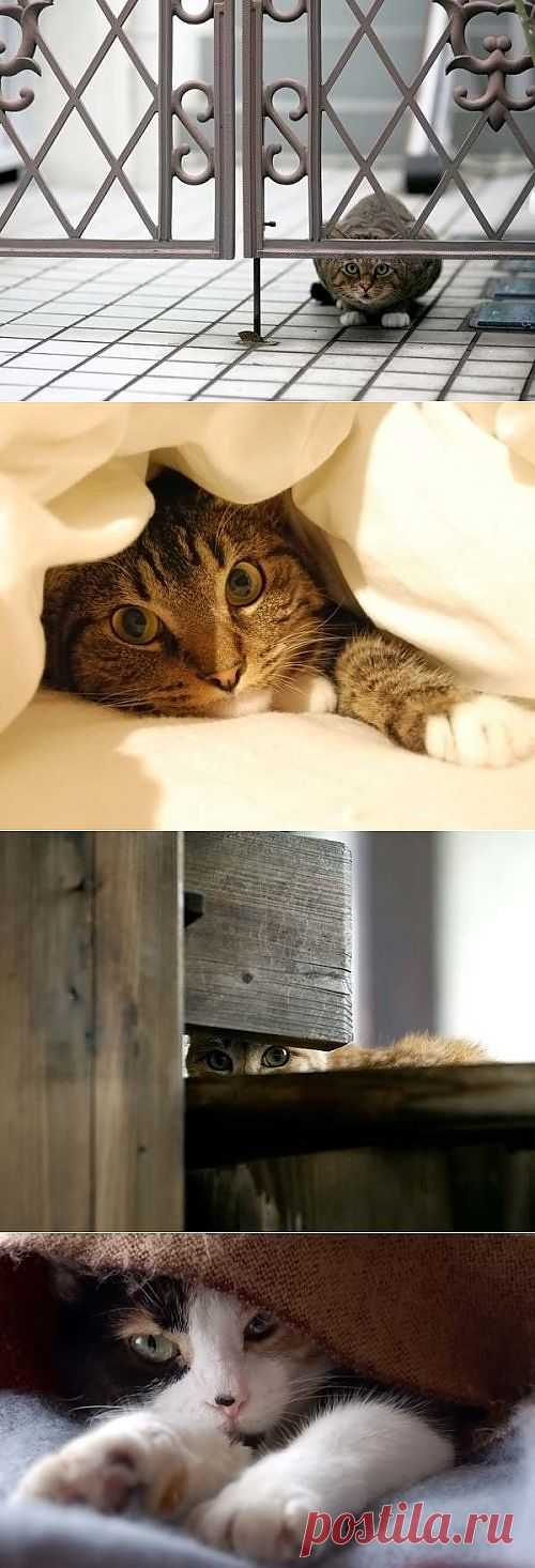 Котейки » Счастливый клик