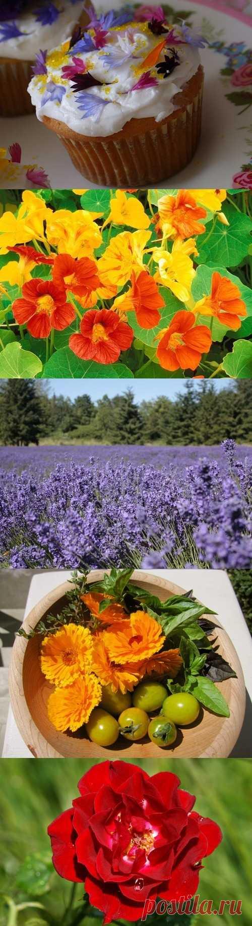 La cocina de flores - que flores se puede usar a la preparación de los platos distintos