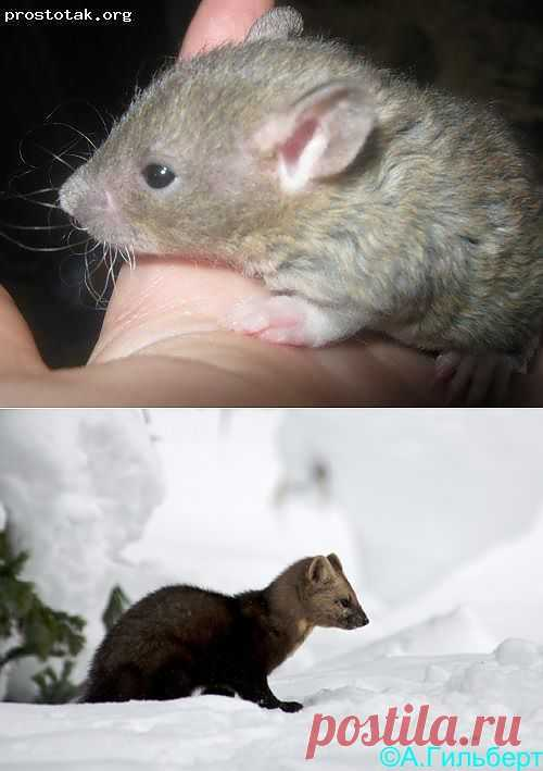 Блоги@Mail.Ru: Крысь...
