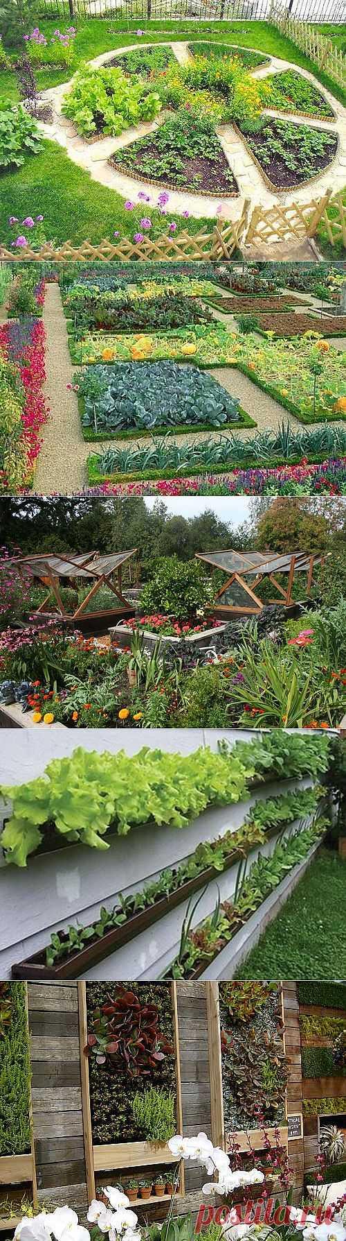 Декоративный огород: как сделать красивые грядки   Дом Мечты