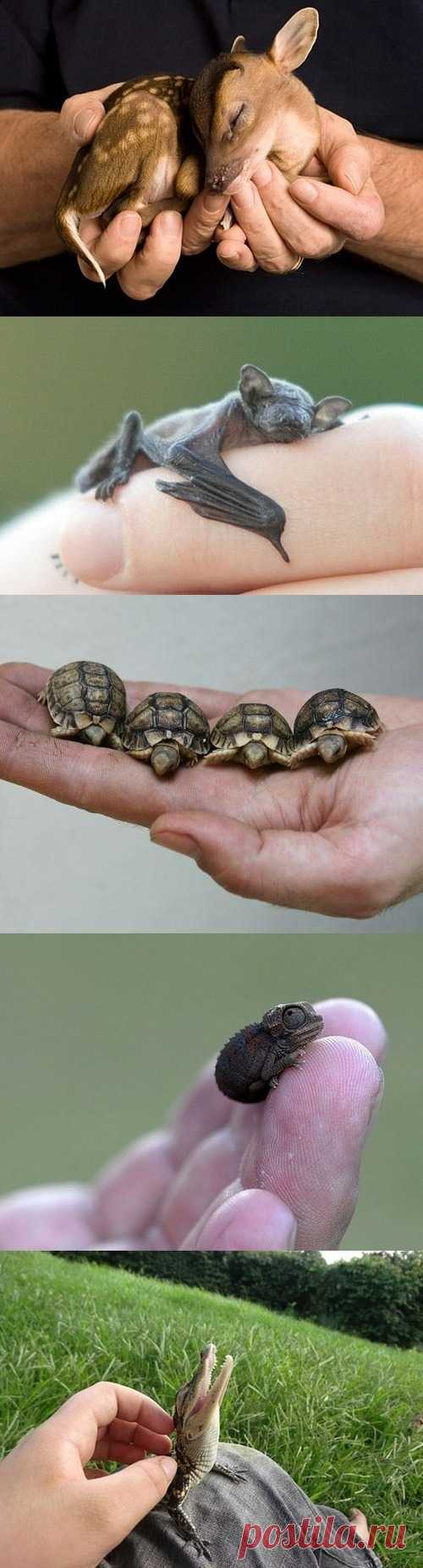 Самые крошечные малыши