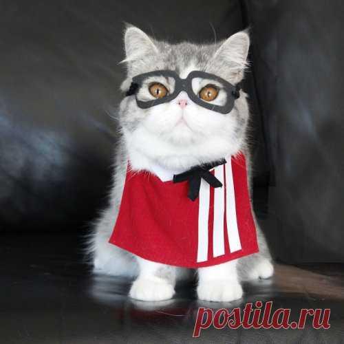 El gato-kospleyschik de Snupi y su amigo Dobi (26 fotos)   el Diablo toma el Internet Polzovatelnitsa por nombre de Shirli (Shirley) comparte las fotografías de los pupilos de casa: el gato de Snupi (Snoopy) (gris), que empezaba a vivir a ella en la casa hace un año, y su amigo Dobi menor (Doby). Muy rápidamente la muchacha ha comprendido que Snupi están dispuesto a llevar los trajes, que para él fabrica. Es paciente esperando, mientras el ama se ponga en él el nuevo vestido, el gato se permitía y fotografiar. La forografía detrás de la forografía...