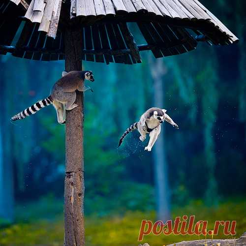 Я все равно научусь летать!