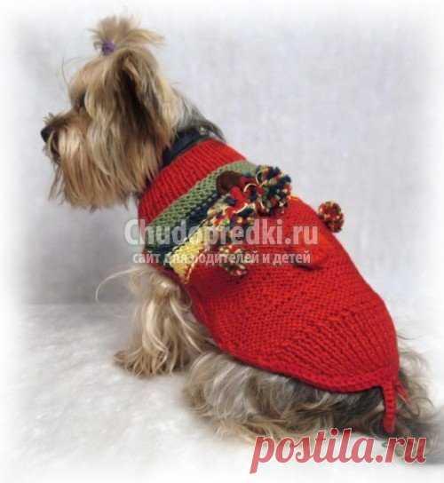 вязаная одежда для собак своими руками выкройки описание вязания и
