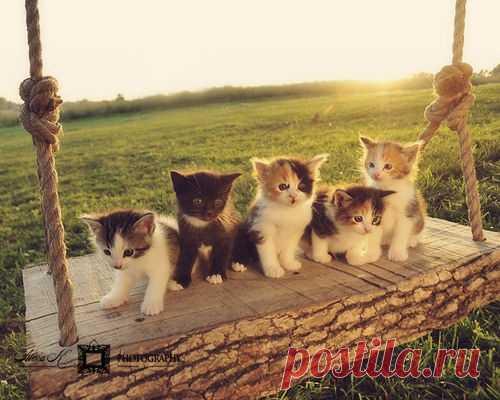 Очаровательные котята на качелях