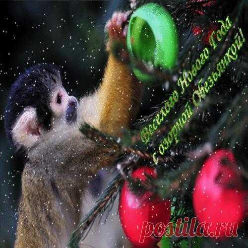 Живые открытки обезьяны
