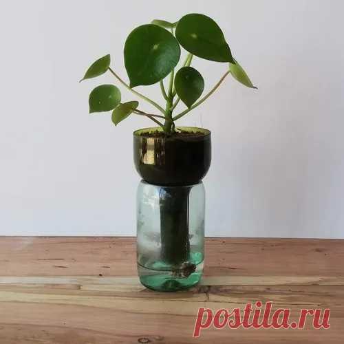 (2) Cuchara Little Plant 15, Maceta Autorregante | Mercado Libre